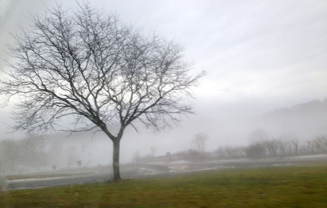 picture: stark winter tree against foggy hills and snow-covered fields